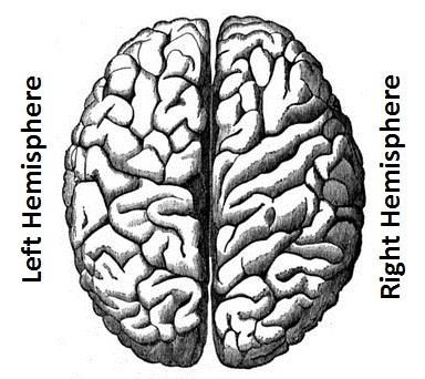 Anulom vilom pranayam and Brain