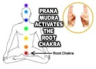 Prana Mudra activates the Root Chakra