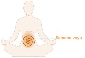 Samana vayu mudra balances the samana vayu